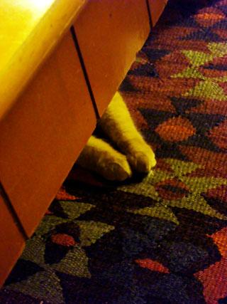 floof-paws
