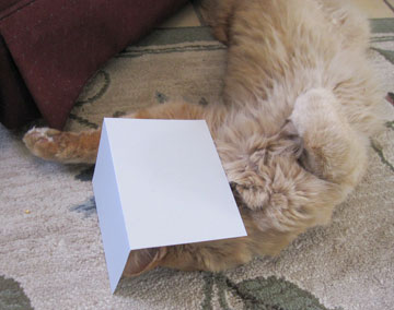 Floof cat relaxing with a greeting card over his face
