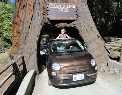 Fiat 500 driving through a tree