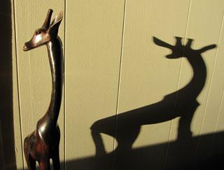 giraffe-reflection