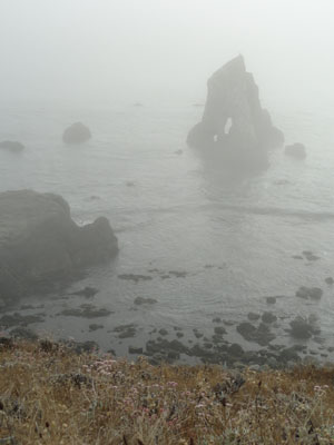 California coastline in the fog