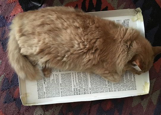 Floof, the cat, sleeping in a board game box lid